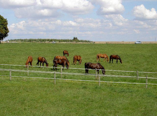 Weiden- insgesamt 12 Weiden, davon 9 Pferdeweiden, 2 Hengstweiden, 1 Ponyweide